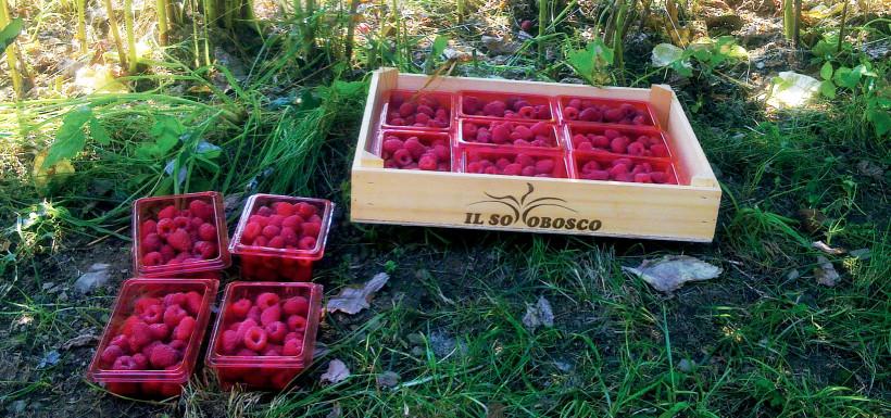 e'-tempo-di_settembre-frutta-sciroppata